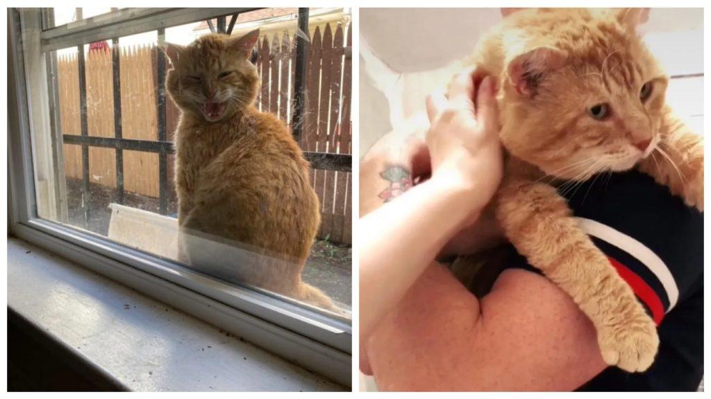 Кот появившийся на Подоконнике, заявил семье, что он готов оставить бродячую жизнь позади