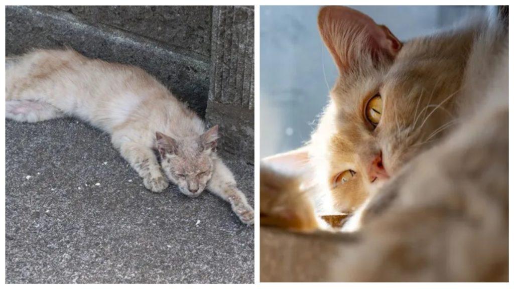 Облезший больной кот стал знаменитой фотомоделью