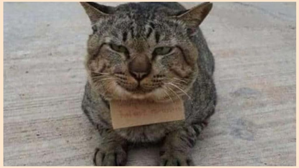 Кот пришёл с прогулки через три дня. А на шее была прикреплена записка