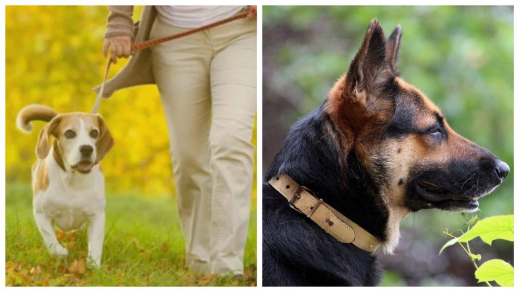 Для слепой брошенной овчарки нашелся новый хозяин и новая семья