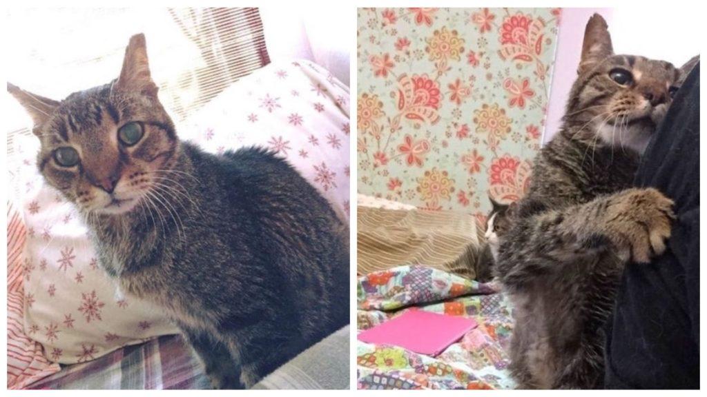 Пожилой кот опустошен после того, как его бросила единственная семья, которая у него была в жизни
