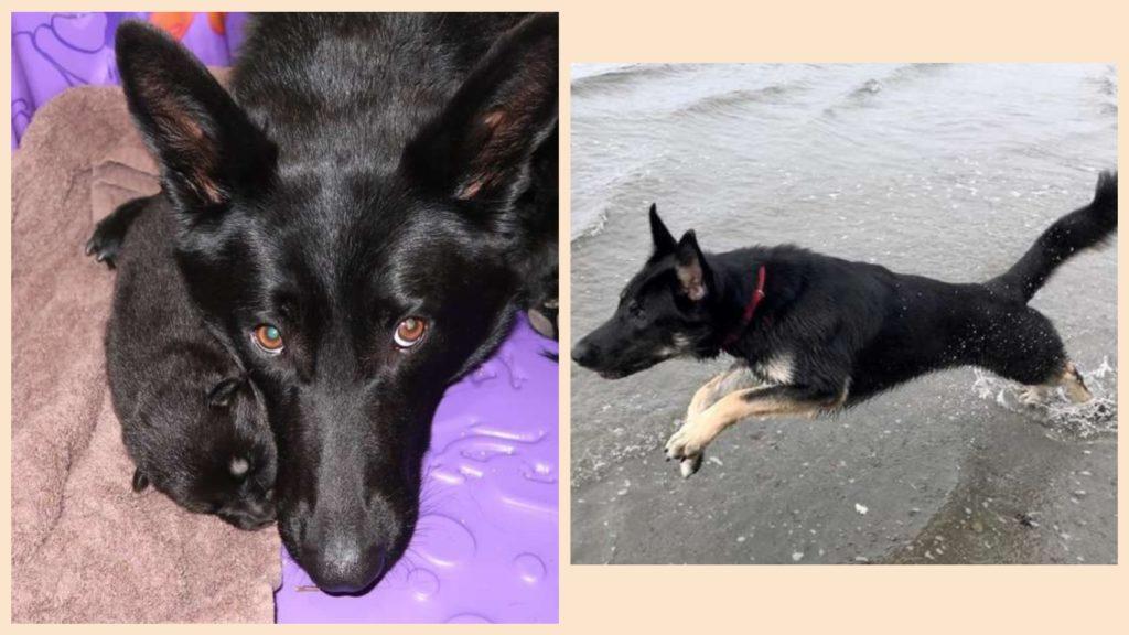 Пес из приюта стал поисковой собакой и спасает попавших в беду животных