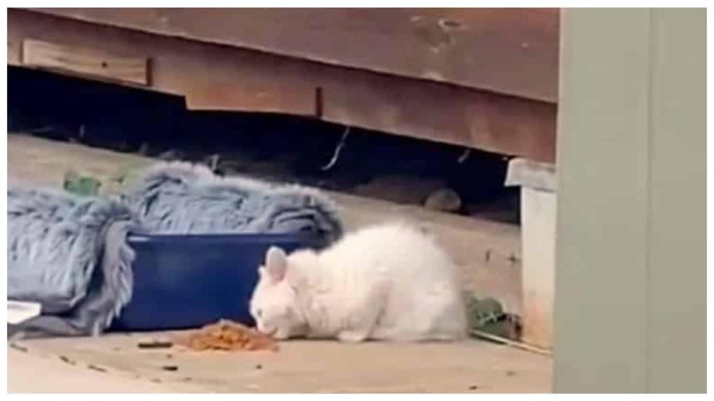 Брошенный котенок последовал за незнакомой кошкой в ее дом и в конечном итоге его оставили жить