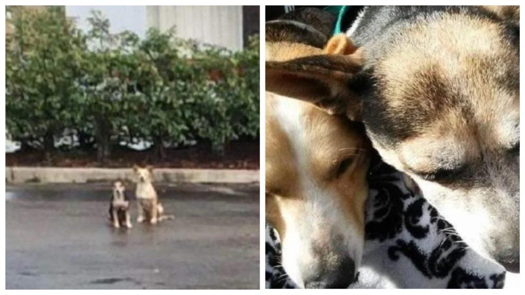 Две собаки неделями не покидали того места, где их бросили