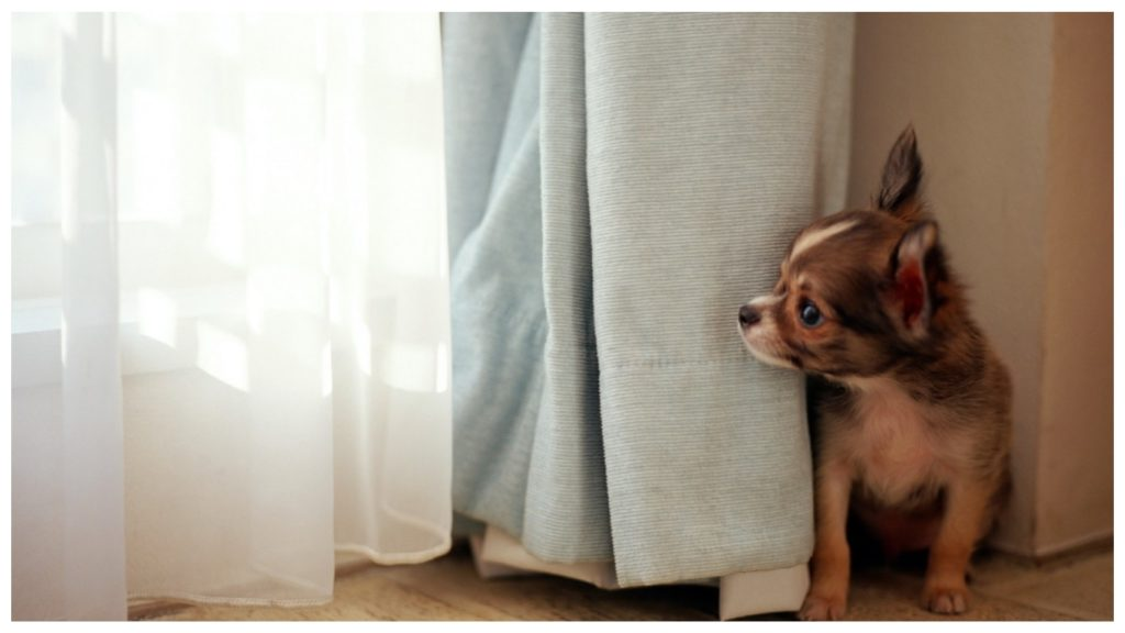 """Перепуганная собака ночью всполошила весь дом, обнаружив """"чудище"""" возле кровати"""