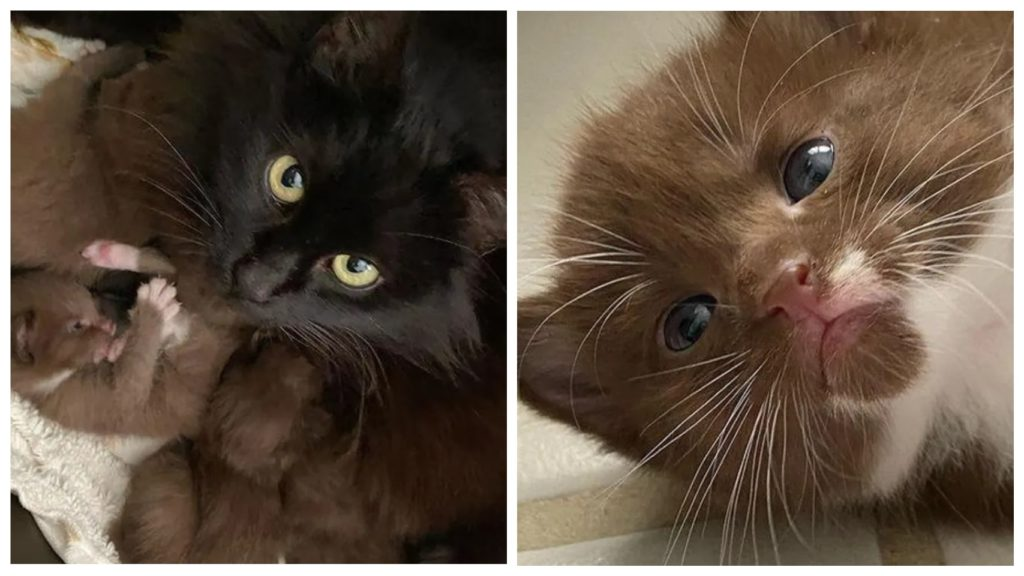 Бродячую беременную кошку взяла семья к себе жить, а она родила им красивых необычных котят