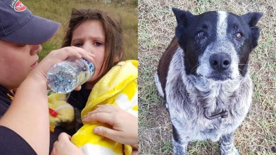 Глухой и полуслепой старый пес  18 часов охранял четырехлетнюю девочку - которая ушла из дома и заблудилась