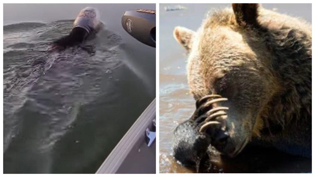 Супруги увидели в речке медведя с пластиковой банкой на голове и решили помочь