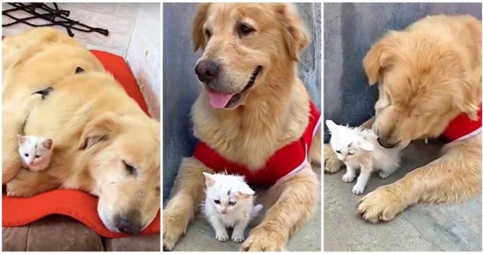 Собака нашла брошенного котенка, забрала его домой и стала для него мамой