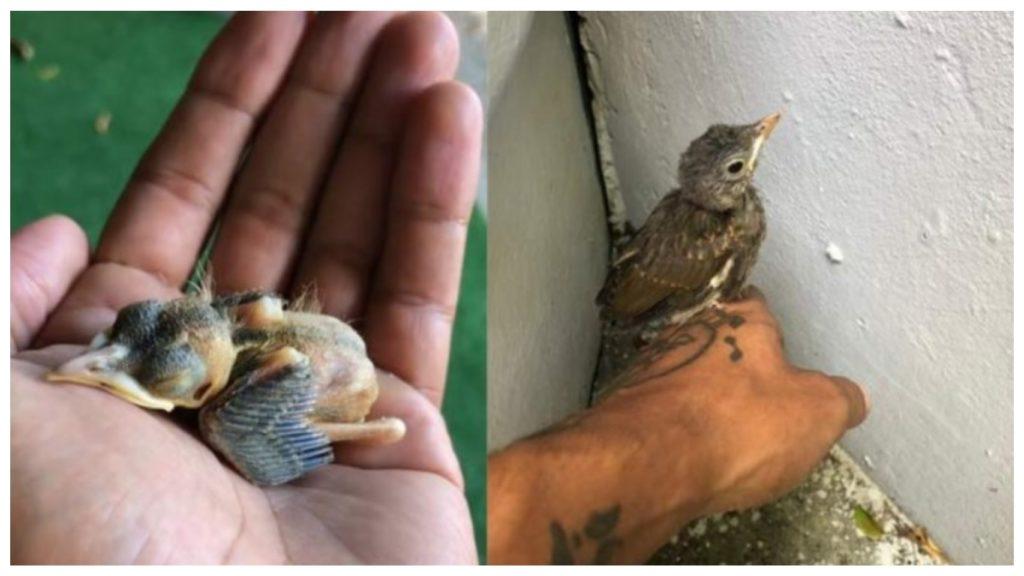 Птица посещает человека, который спас его когда он был детенышем