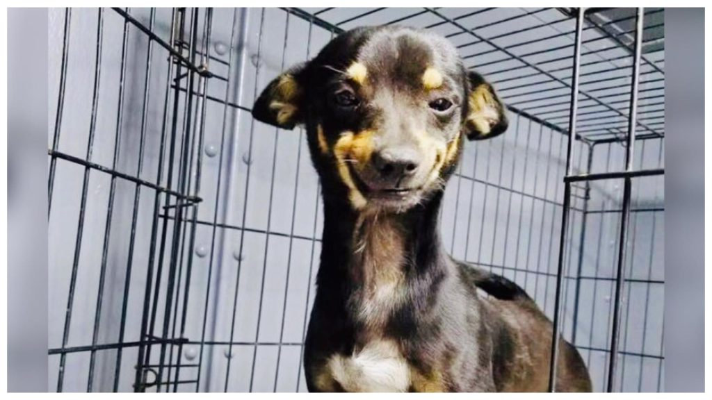 Собака - которая все время улыбалась