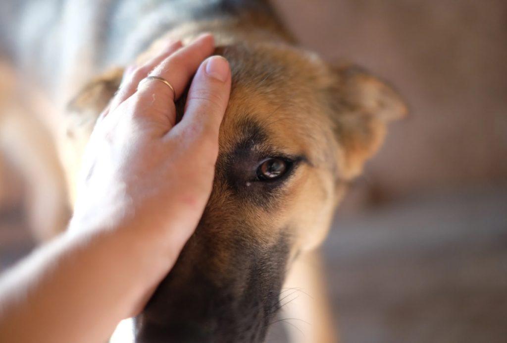 Не легкая судьба пса Дика