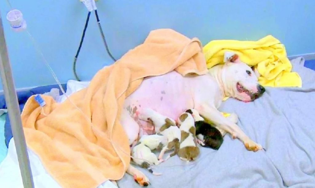 Мужчина выбросил  свою собаку из машины, пока она рожала