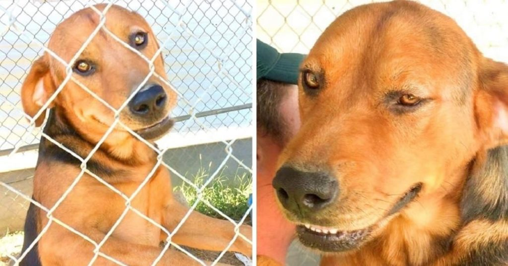 Семья переехала и оставила собаку в старом доме, привязанную в палящей жаре, без воды, еды или тени