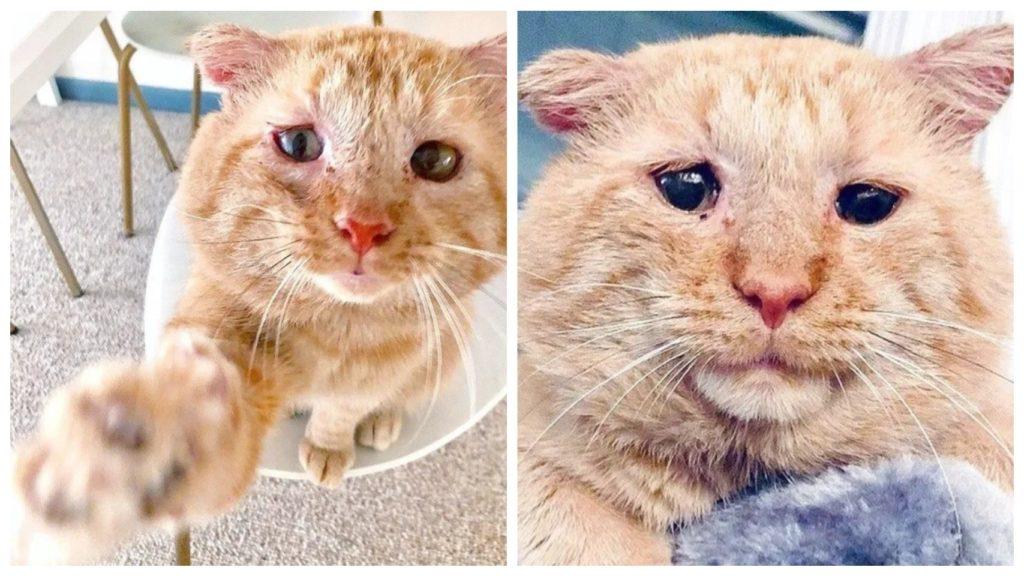 После пяти лет не легкой жизни на улице, обтрепанный кот оказался нужным и любимым