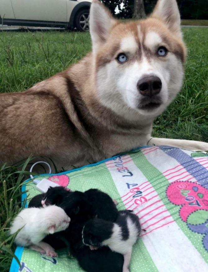 Собака нашла и спасла новорожденных котят, запечатанных в коробке