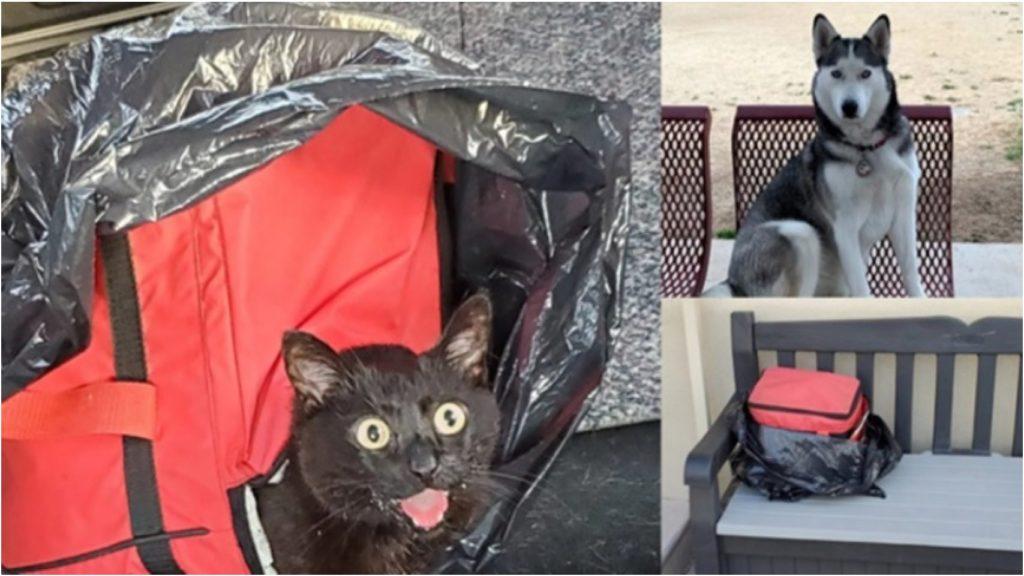 Собака спасла закрытого в сумке-холодильнике котенка
