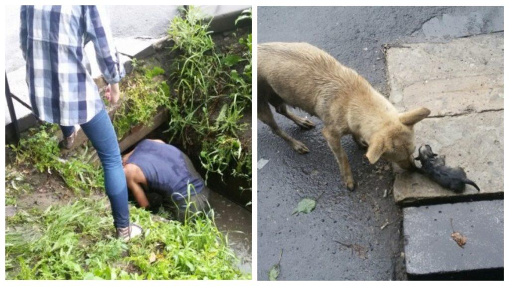 Парень спас щенков, вытащив их из затопленной ливнем канавы