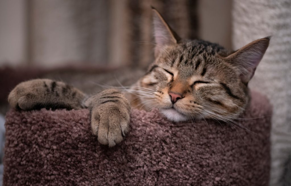 Хозяйственный кот, который  приносил понравившиеся вещи в дом