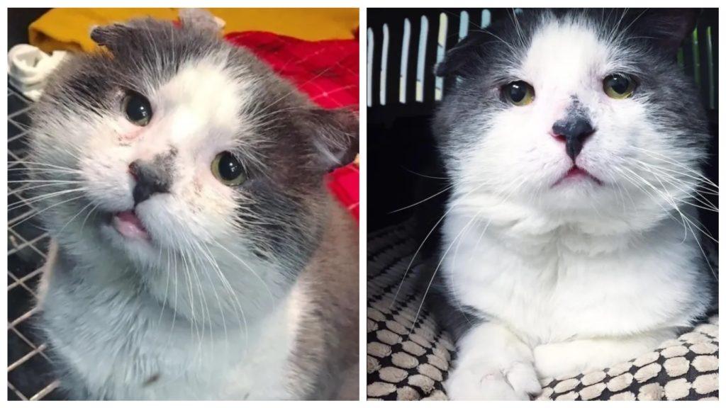 Кошка, которая прожила большую часть своей жизни бродя по улицам, наконец обрела семью
