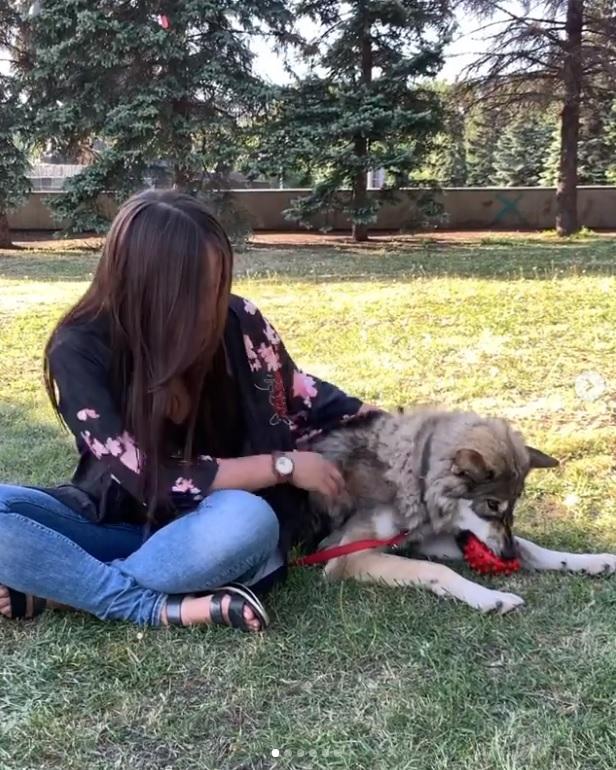 Девушка приручила волчонка от которого отказалась мама