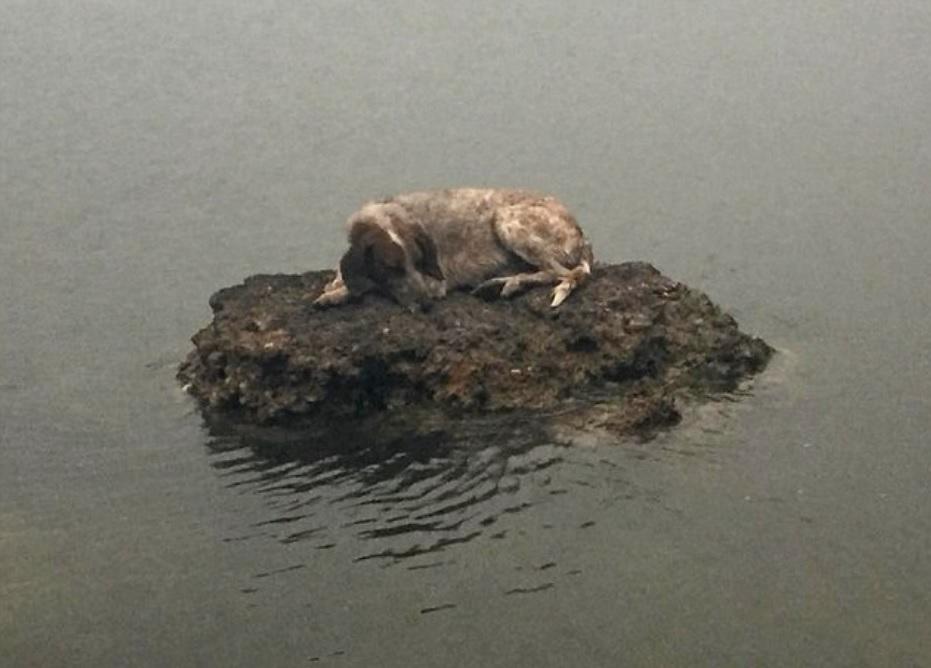 Собака пряталась от пожара в море на камне - но помощь подоспела вовремя
