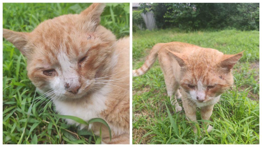 Трагическая история жизни брошенного кота со счастливым концом
