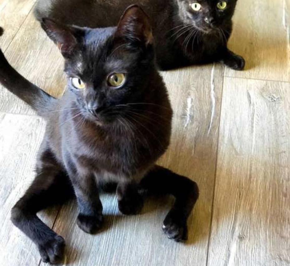 Женщина взяла из приюта котика с врожденными паучьими лапками