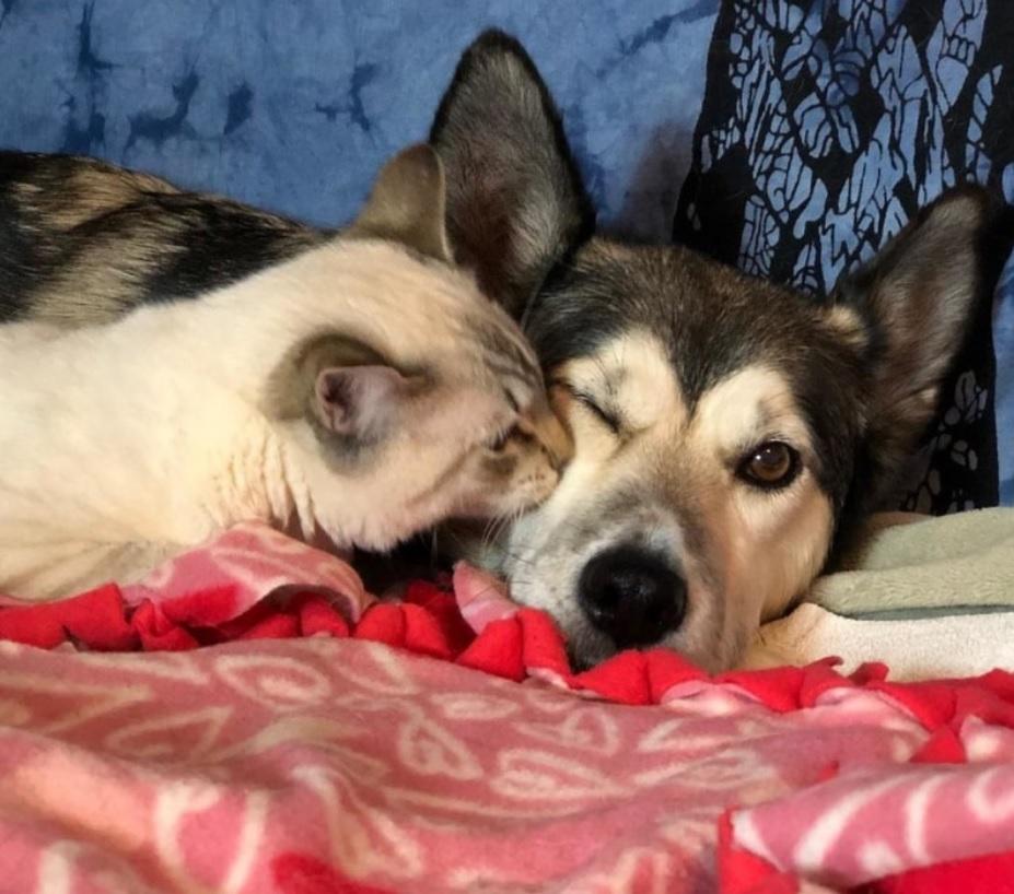 Дружба котенка с парализованными лапками, с собакой, которая заменила ему маму