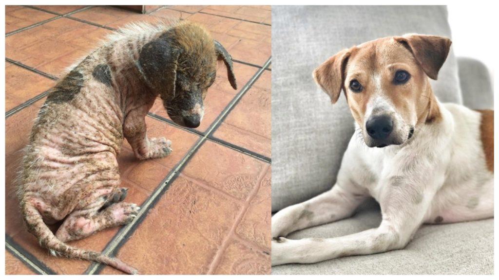 После пяти лет домашней жизни, собака осталась без хозяйки и стала бездомной