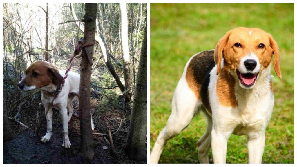 Привязанный веревкой к дереву, пес преданно ждал своего хозяина, но хозяин так и не вернулся