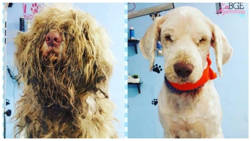 Слепой и глухой собаке, со свалявшейся шерстью, погибающей на обочине дороги, судьба предоставила второй шанс жить и радоваться жизни
