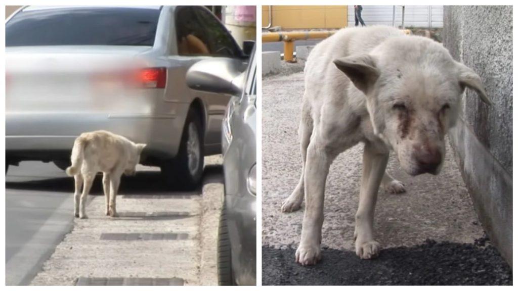 Собака бродила около 2 лет в поисках своей хозяйки, несмотря на то, что ее больше нет..