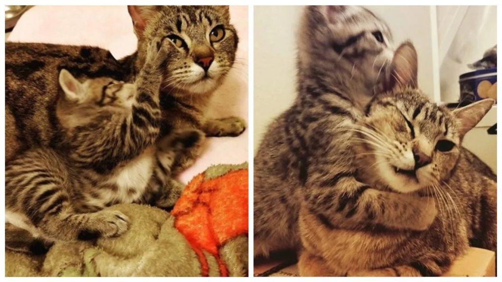 Семья взяла с приюта котенка и не смогла оставить там мать-кошку и забрали ее тоже
