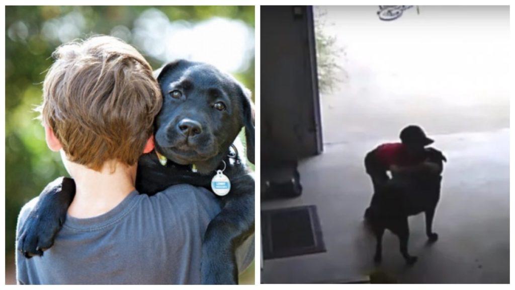 Мальчик пробирается в гараж соседей каждый день, чтобы обнять собаку