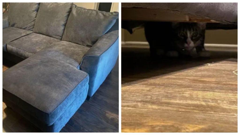 """Девушка купила диван бывший в употреблении, а на другой день он стал """"живой"""""""