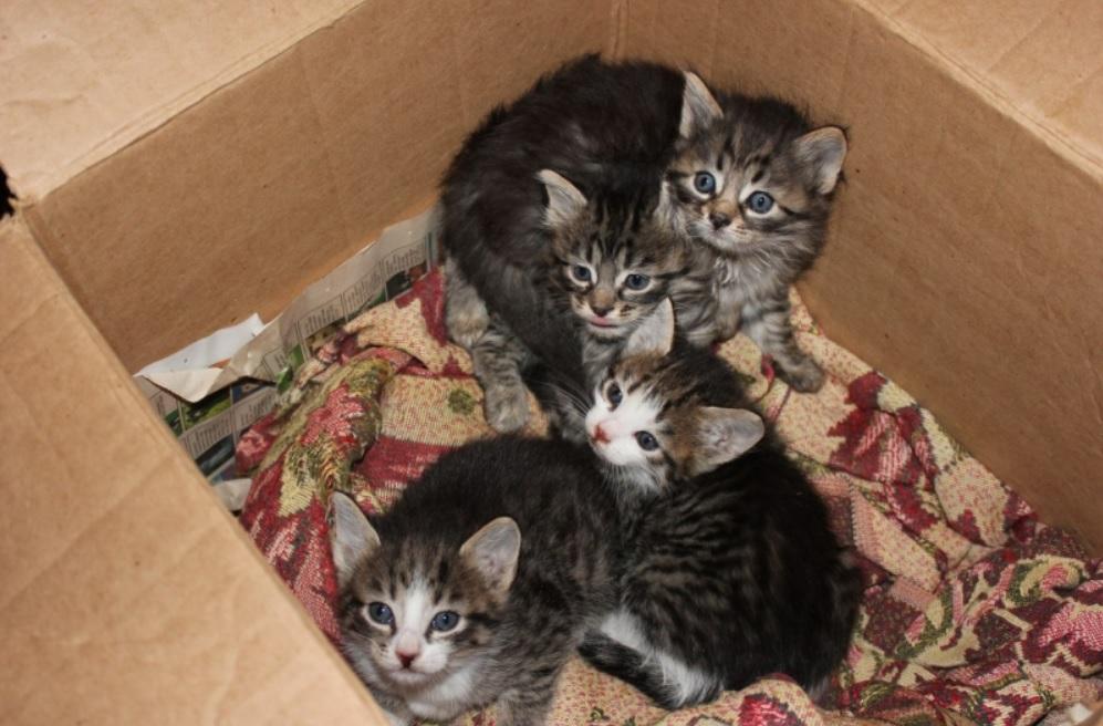 Пенсионерка спасла котят замурованных в подвале