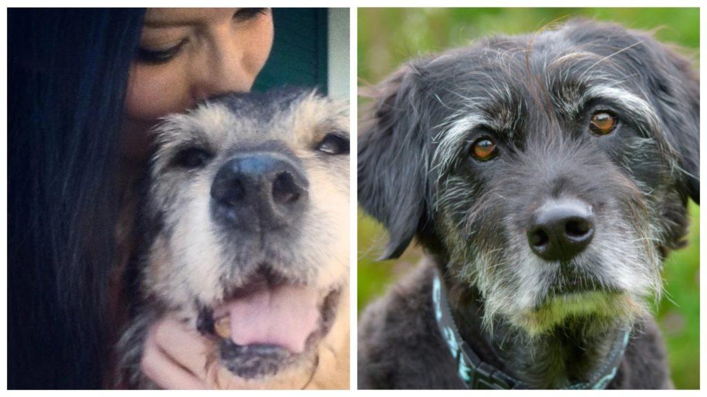 Женщина забирает из питомников только пожилых собак, даря им любовь и ласку в последние годы жизни
