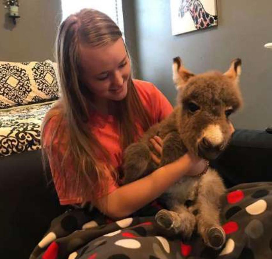 Девушка спасла ослику жизнь и стала для него приемной мамой