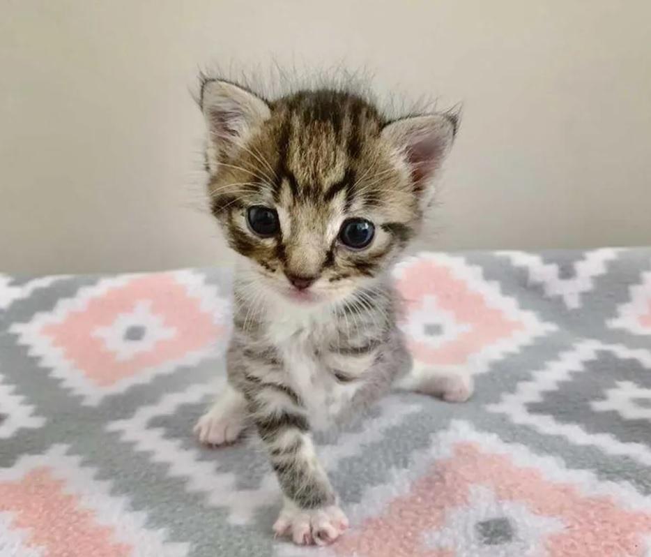 Котенок, у которого отсутствует лапка, показывает всем, что можно жить полноценной жизнью