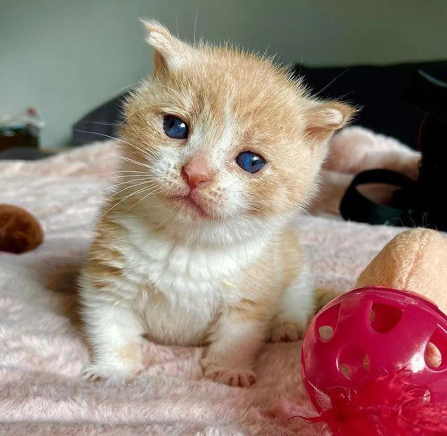 Котенок с невероятной устойчивостью полон решимости жить полной жизнью!