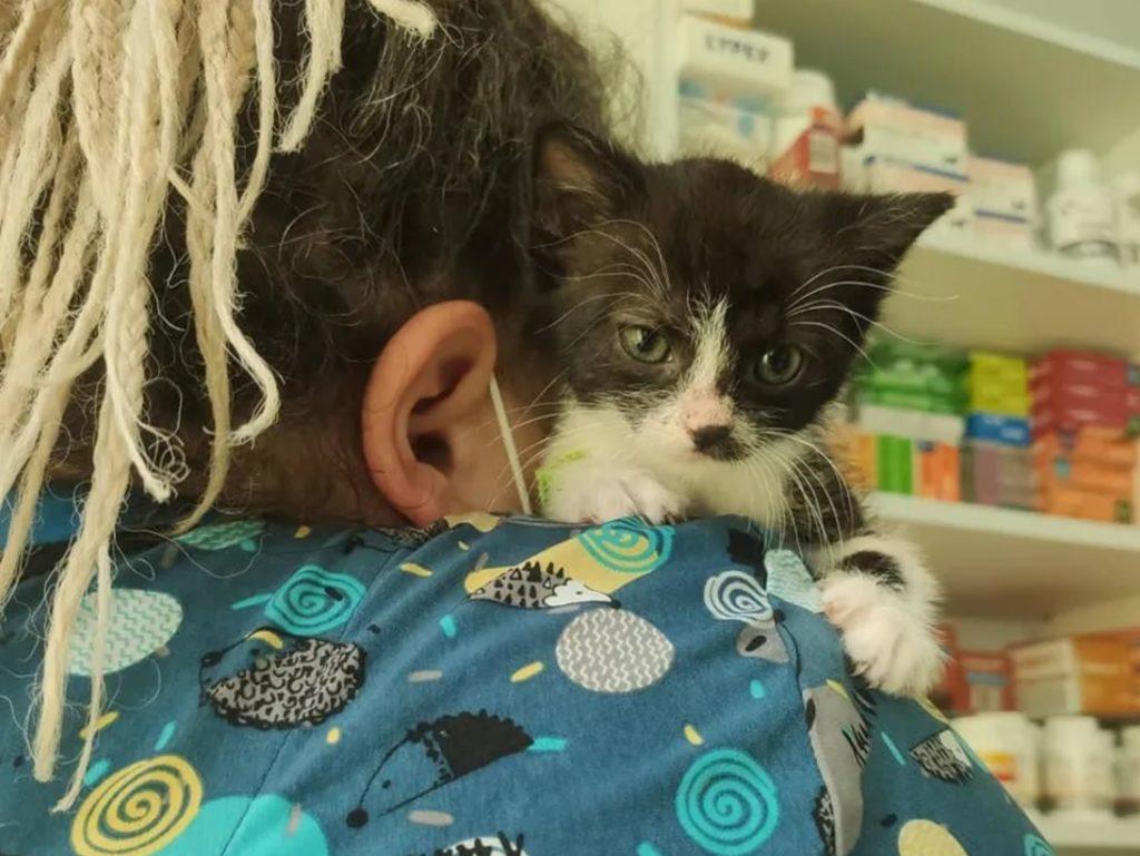 Котенок, после того, как чудом остался жив, боялся оставаться один