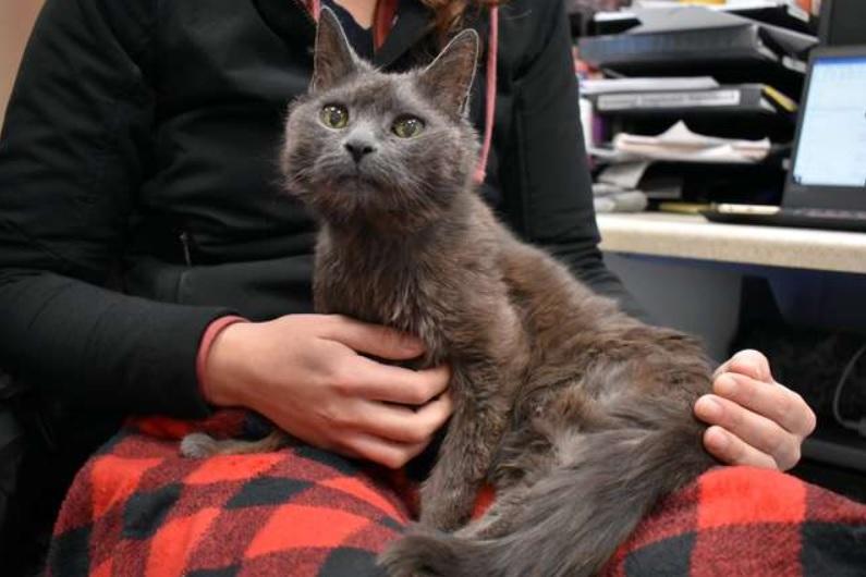 В приюте обнаруживают, что пожилой кошке, которую забрали после смерти хозяина, 21 год