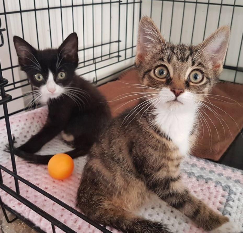 Котята, родившиеся с четырьмя лапками на двоих, живут и радуются жизни ❤