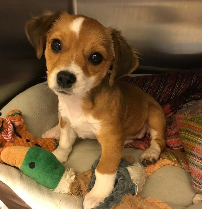 Девушка спасла щенка - который погибал от укуса клеща и стал для нее верным другом и помощником