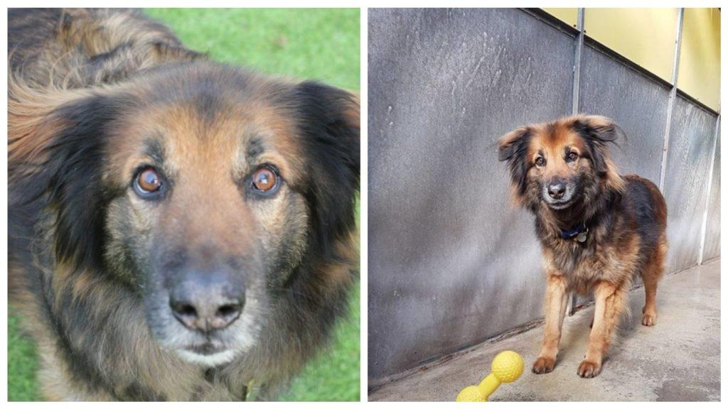 После 10 лет жизни в приюте, у собаки теперь есть свой дом и любимая им и любящая его семья