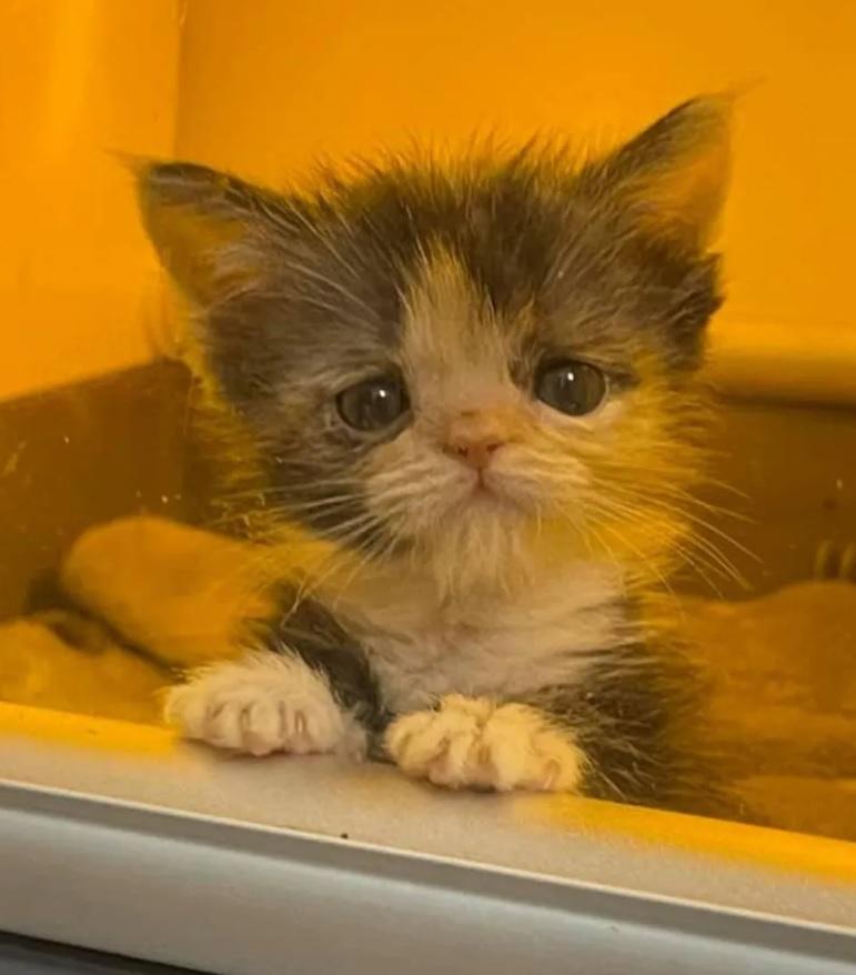 Крошечный котенок с невероятной волей к жизни - преодолел множество препятствий и расцвел в очаровательного котика
