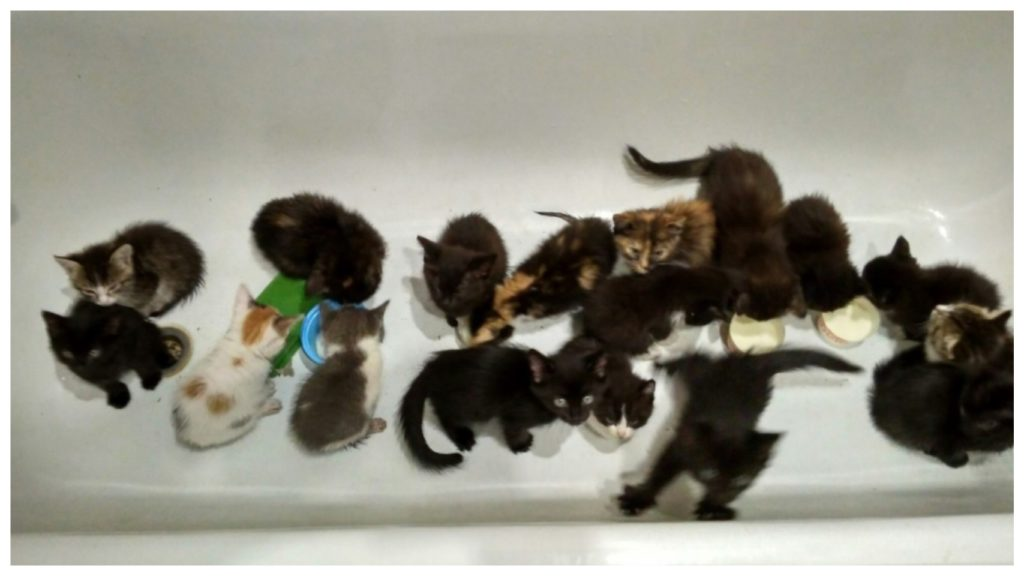 Молодой человек на улице нашёл коробку полную котят и забрал их всех к себе