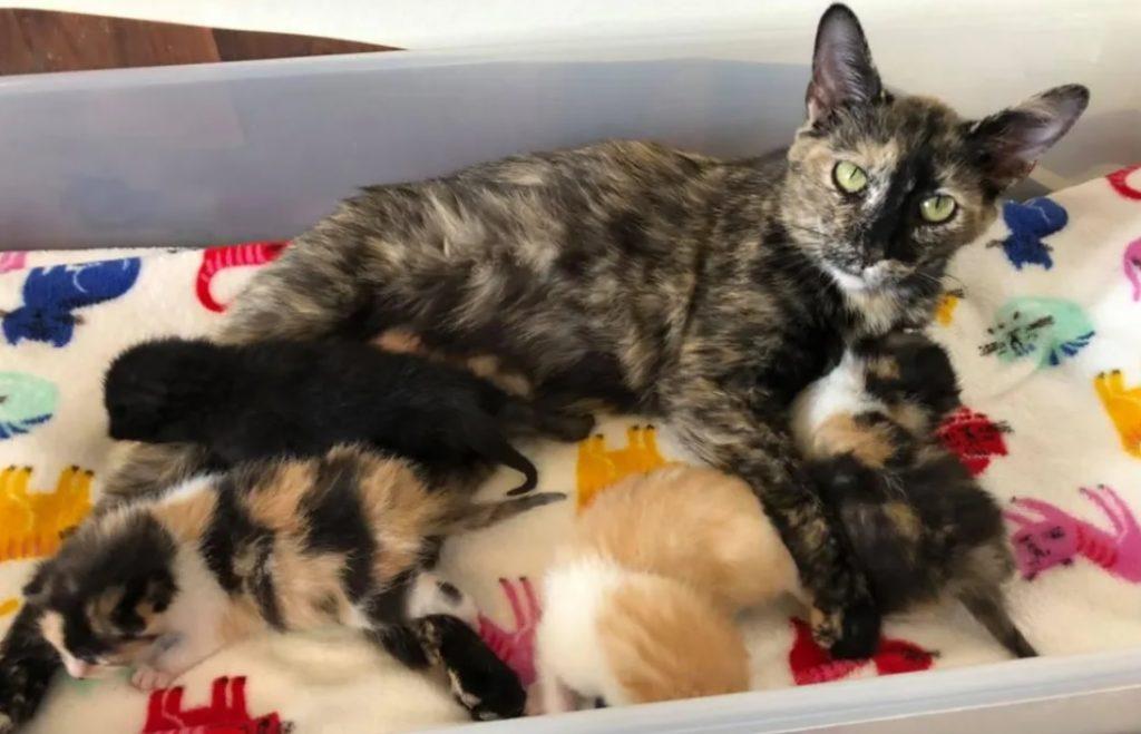 Кошка согревала своих еще нерожденных котят от холода, пока не прибыла помощь, теперь ее мечта сбылась
