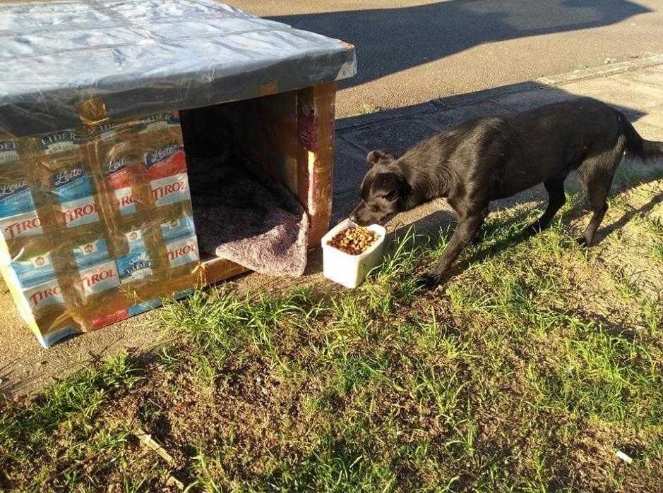 Женщина делает домики для брошенных собак, используя коробки